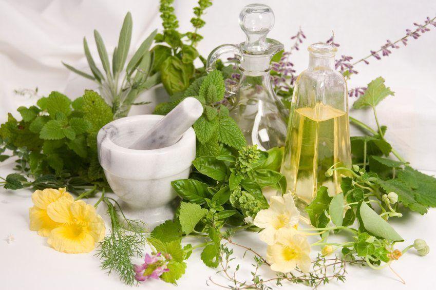 dieta plantas medicinales