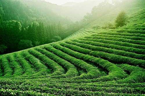 De que té es posible rápidamente adelgazar