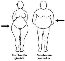 distribucion de la grasa corporal
