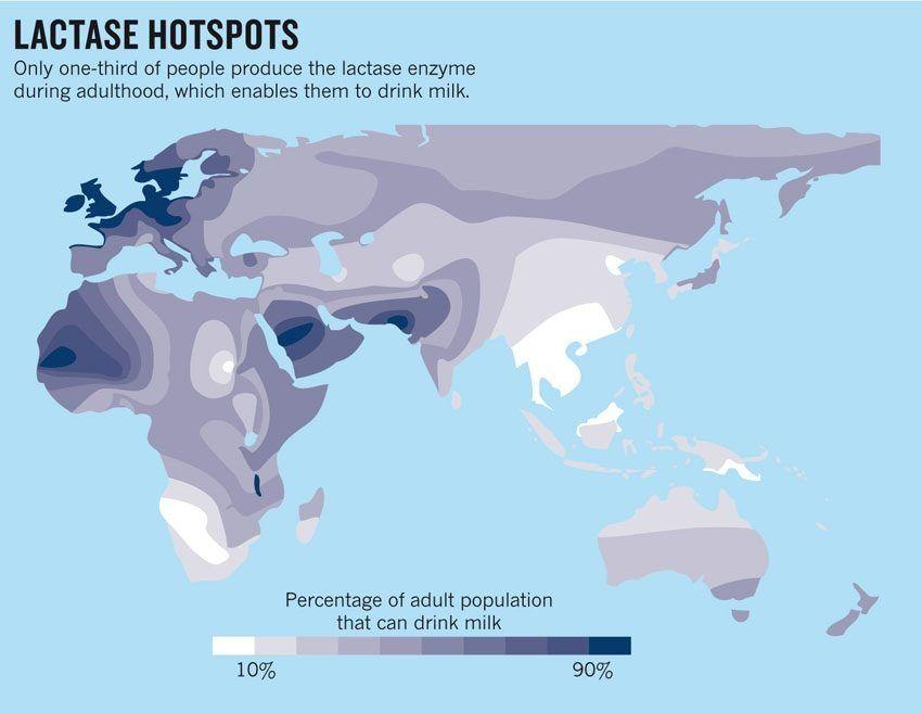 Mapa con las poblaciones tolerantes a lactosa