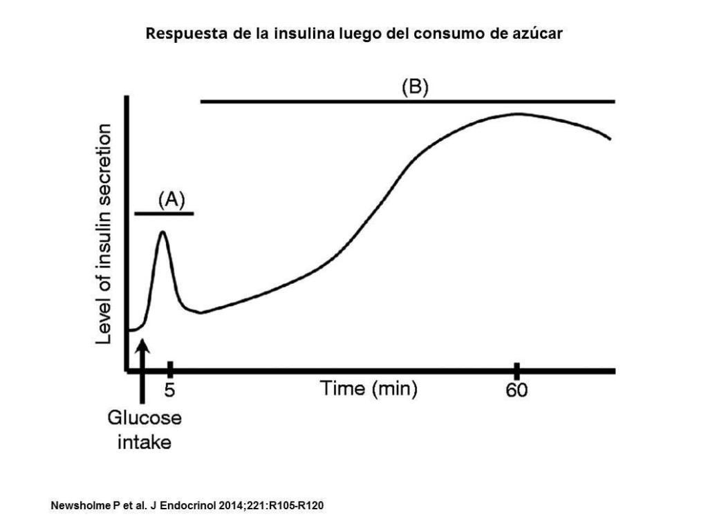 respuesta insulina consumo de azucar