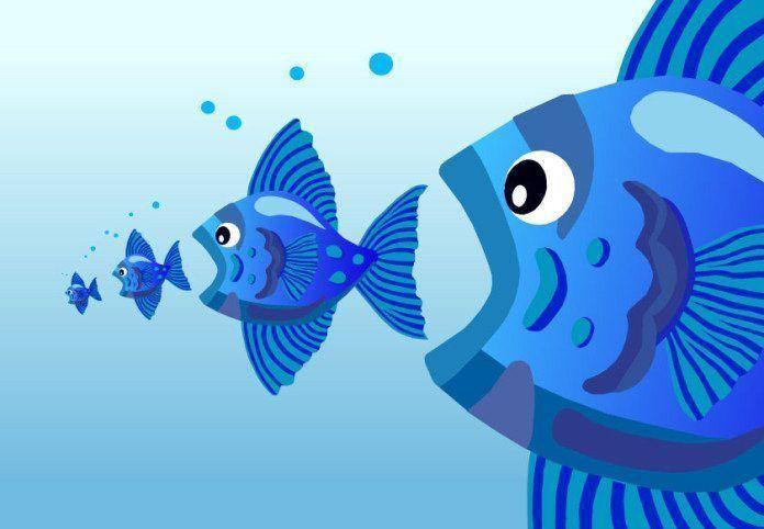 mercurio acumulado en pescados