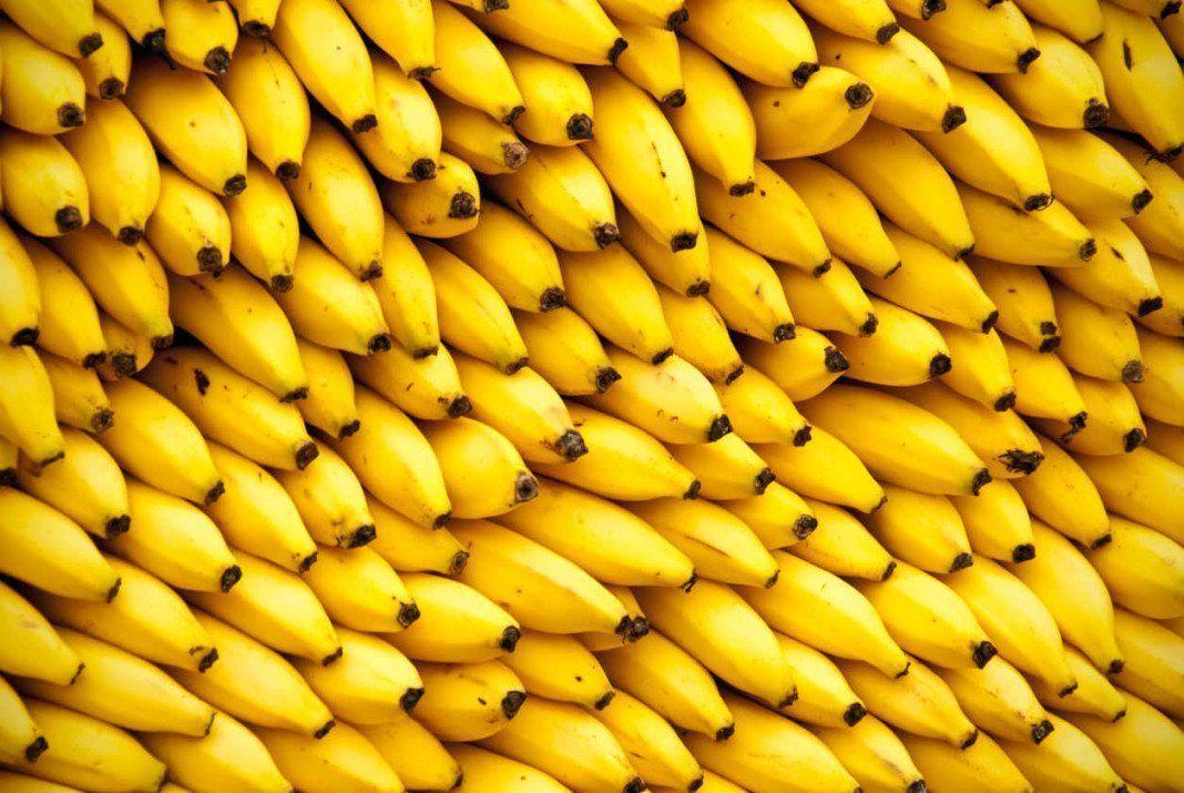 Ironia del plátano
