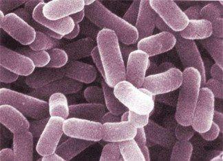 probioticos que son