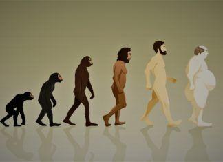 Evolución del hombre, de ágil a obeso