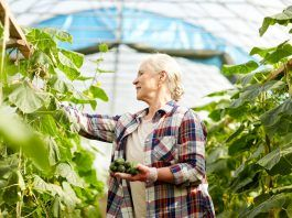Mujer mayor cosechando pepeinos